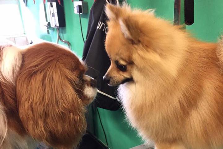 Coco visits the salon